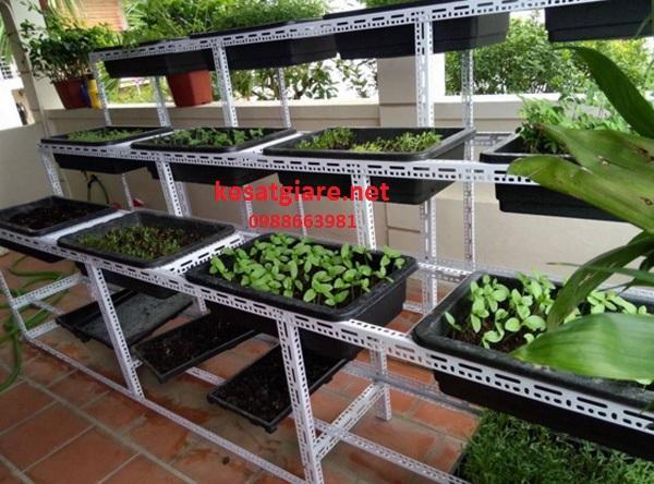 kệ sắt V lỗ trồng rau kiểu bậc thang